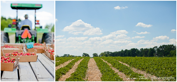 Prellwitz strawberry farm by Kim Theil Photography